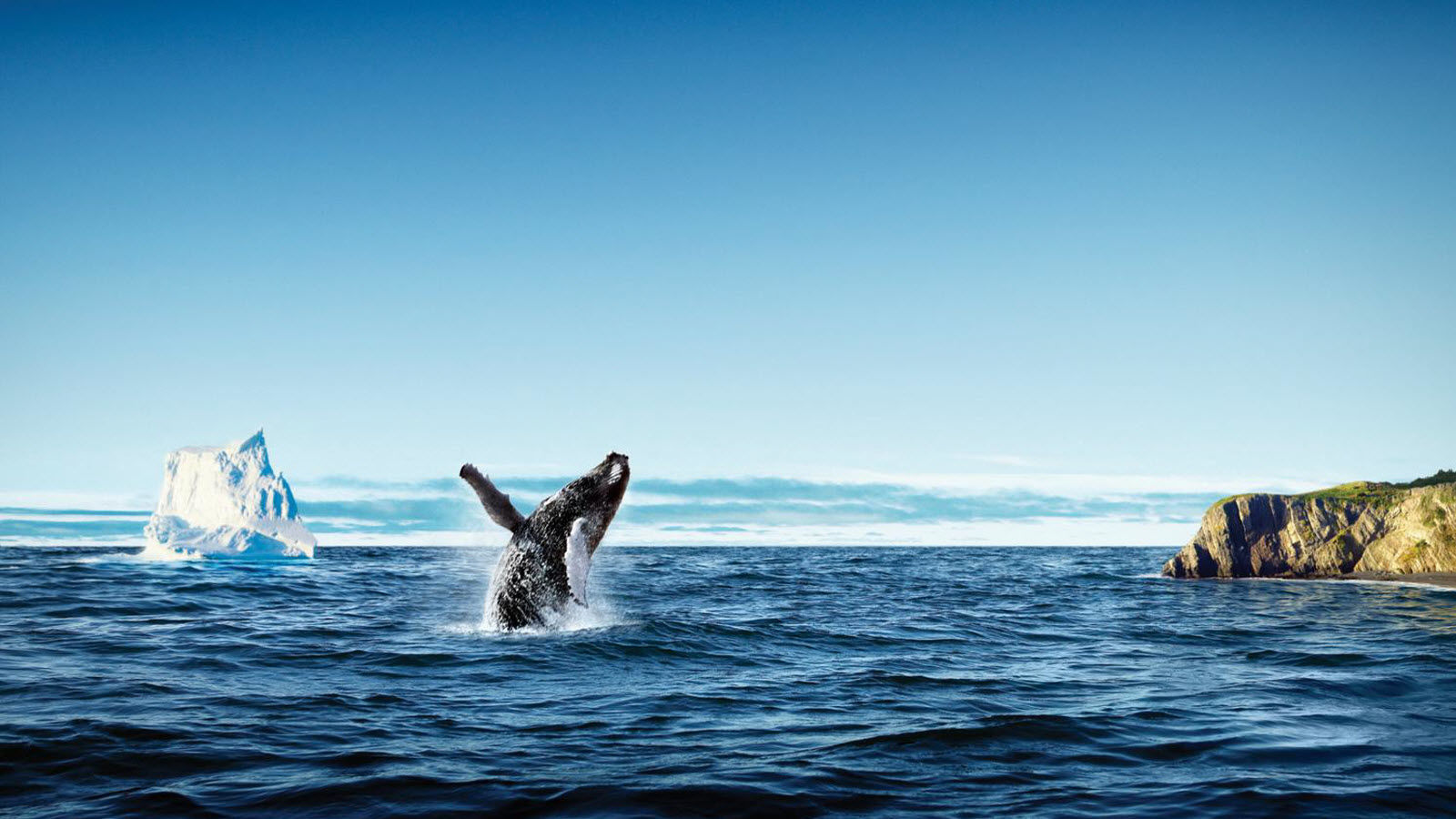 Local Area Attractions - Whale Watching